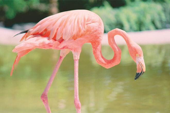 Davie Flamingo Gardens